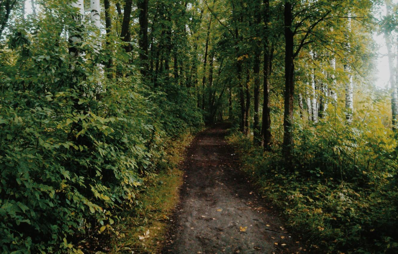 Фото обои осень, лес, тропа