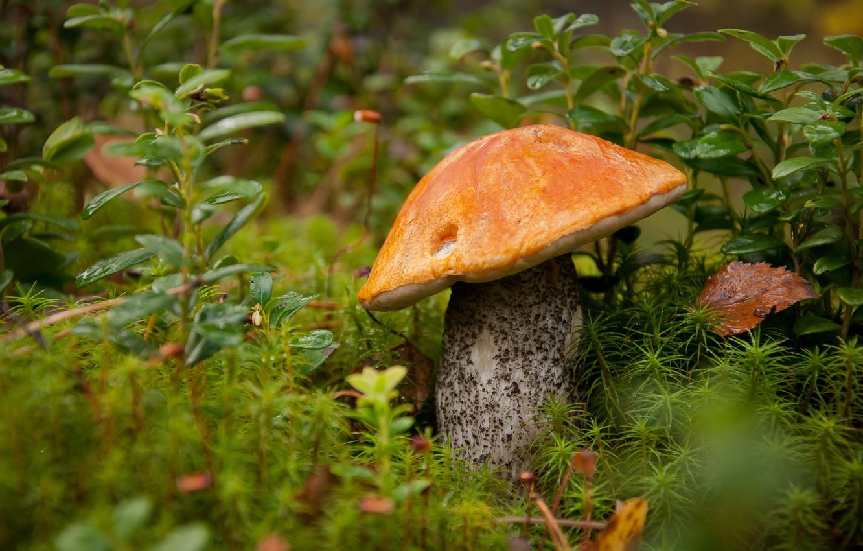 фото грибы в лесу на рабочий стол гору