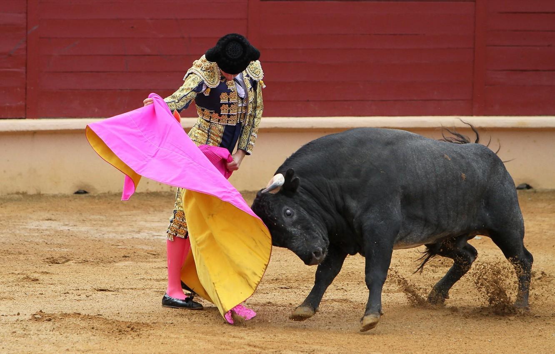 Картинки матадор быки