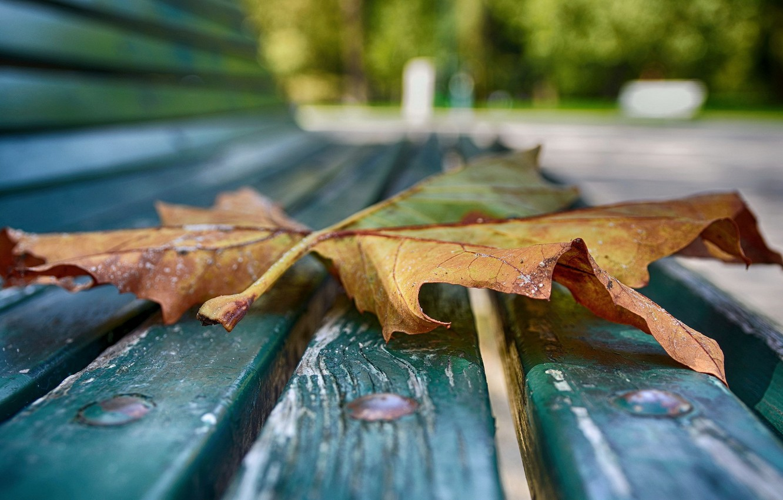 Фото обои осень, макро, лист, скамья