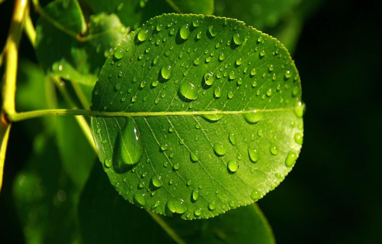 Фото обои осень, капли, роса, Лист, зелёный, прожылки