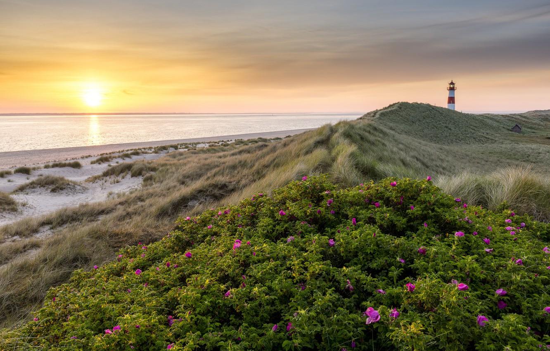 Фото обои море, пляж, лето, цветы, восход, маяк, утро