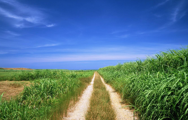 Фото обои дорога, поле, путь