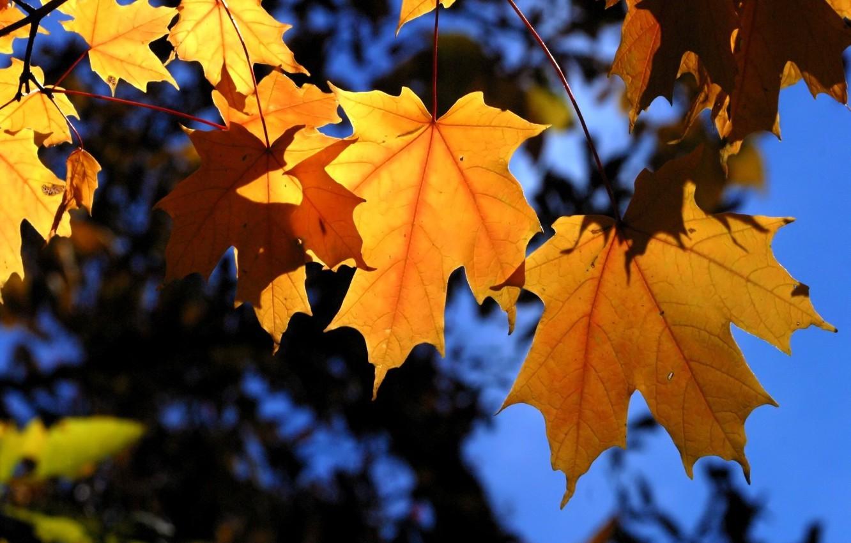 Фото обои осень, листья, деревья, ветки, синий, желтый