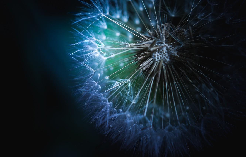 Фото обои белый, цветок, свет, одуванчик, green, white, flower, blue, macro, purple, soft, dreamy, seed, fine art, …