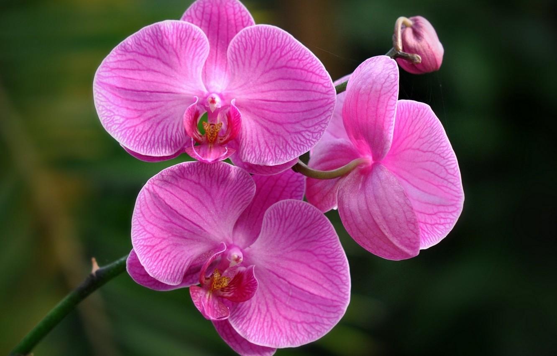 Фото обои природа, розовый, обои, лепестки