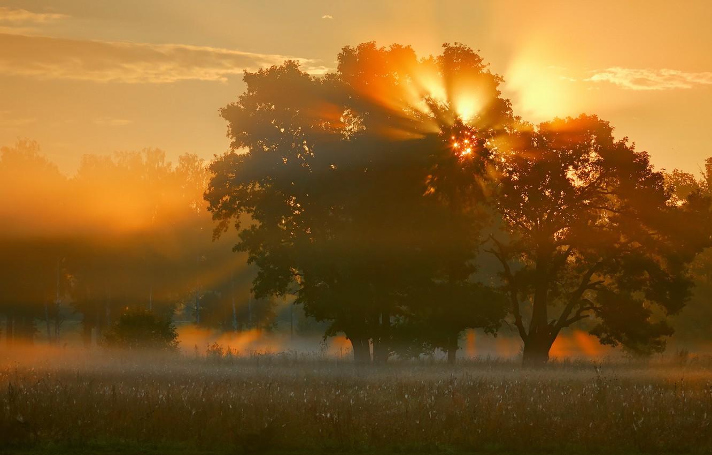 Фото обои поле, свет, природа, туман, дерево, утро