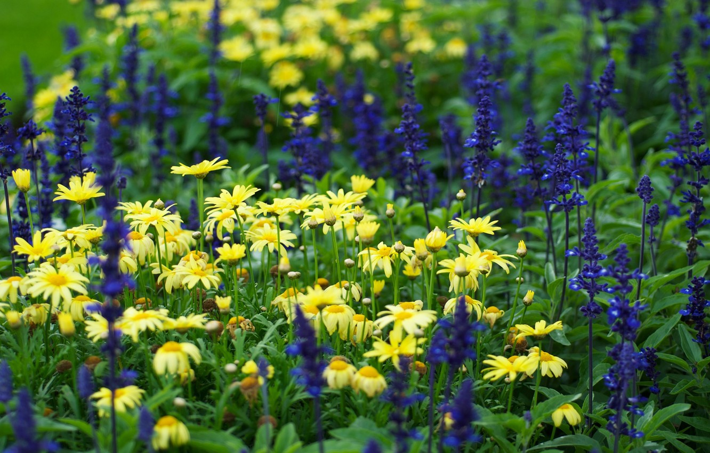 Фото обои поле, трава, цветы, обои, ромашки, луг