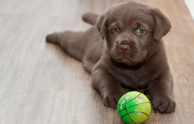 Обои Собака, мяч, друг. Собаки foto 14