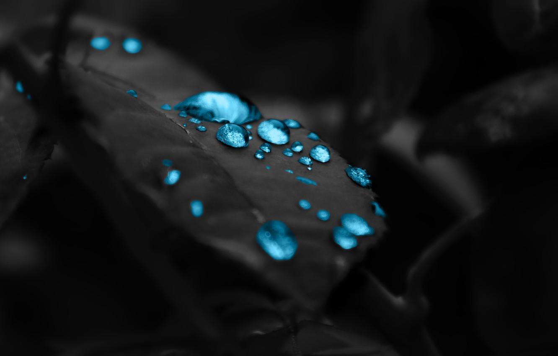 Фото обои капли, фон, черный, листок, красиво