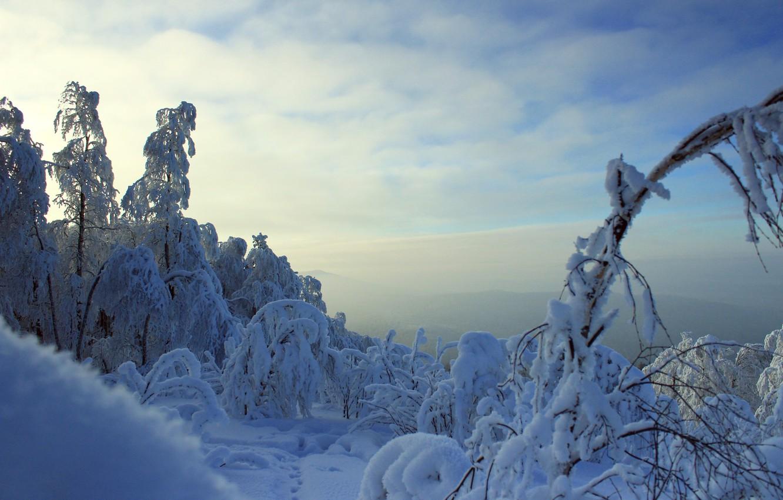 Фото обои зима, горы, Лес, мороз, ветки в снегу