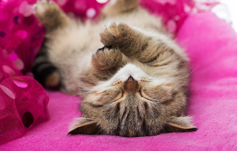 заметить, что картинка спящего котенка это