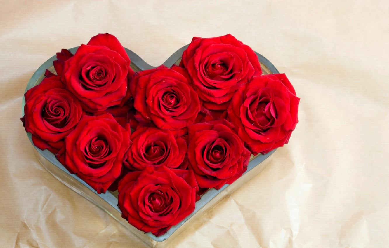 Картинки розы любящая роза
