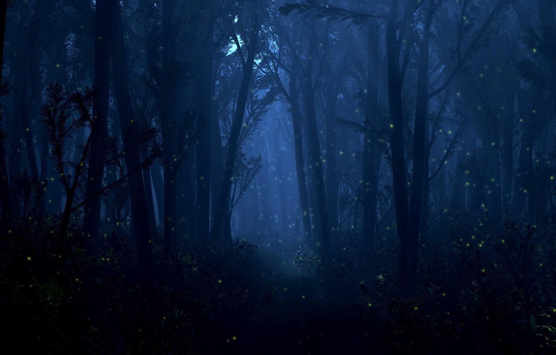 Фото обои лес, свет, деревья, ночь, светлячки, огоньки