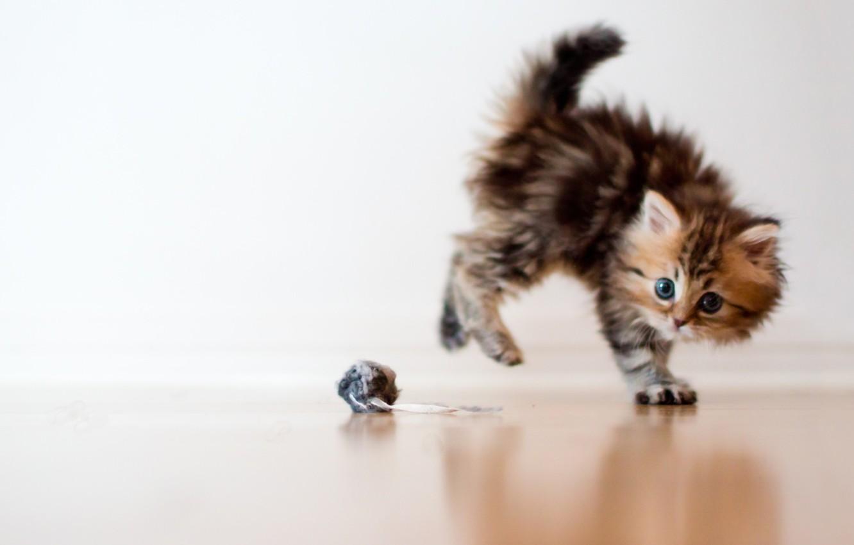 Обои котёнок, daisy, Кошка, ben torode. Кошки foto 7