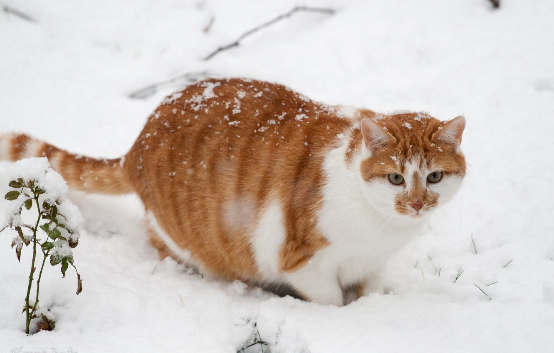 котики зимой фото покровительствовал мудрости, поэтому