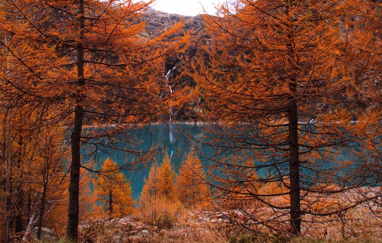 Фото обои осень, лес, деревья, горы, природа, озеро, forest, Nature, trees, landscape, autumn, lake, fall