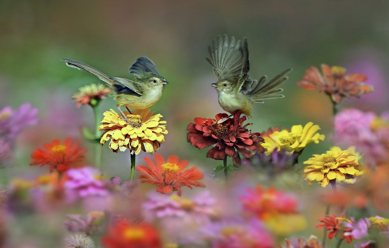 Фото обои цветы, птицы, крылья, луг, хвост