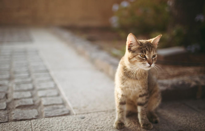 Фото обои love, cat, beautiful, mood, good, glasses
