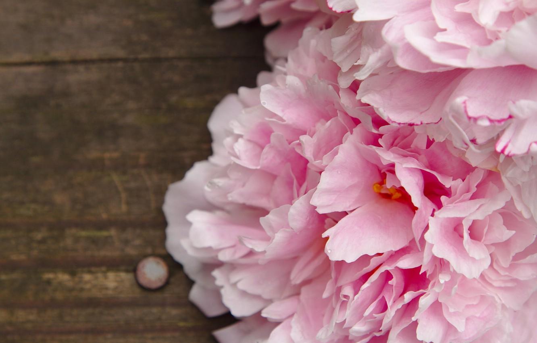 симпатичного, картинки на рабочий стол айфона цветы аниматоры