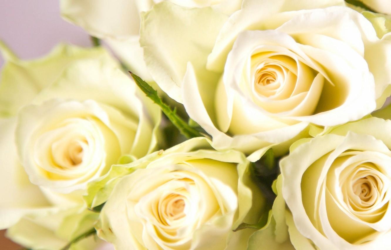 Стихами для, картинка белые розы на рабочий стол
