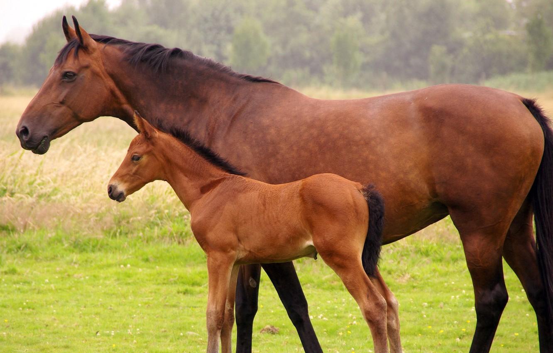 Обои лошадь, жеребёнок. Животные foto 7