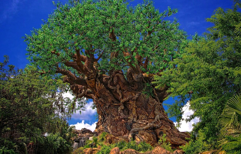 культивировать экзотический вековые деревья картинки спальня