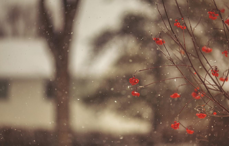 Фото обои зима, макро, снег, снежинки, ветки, ягоды, дерево, размытость, красные, Рябина