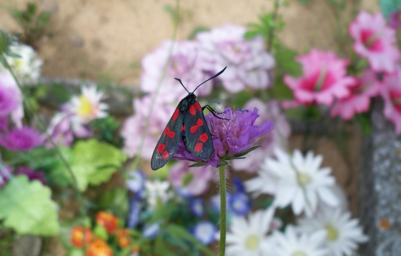 Фото обои цветок, бабочка, сад, луг