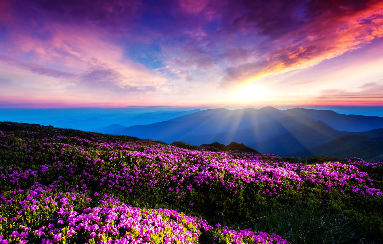 Картинки природа цветок