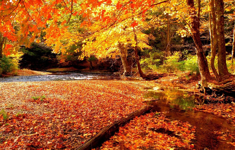 картинки осень октябрь природа обои на рабочий стол
