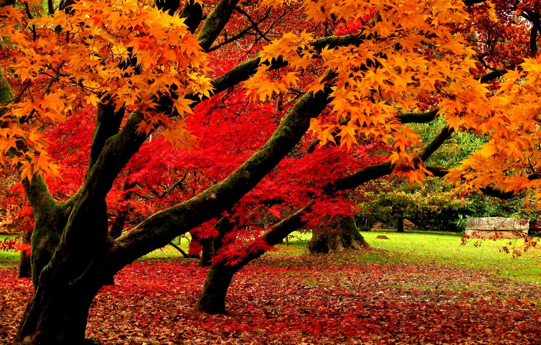Обои leaves, trees, autumn. Природа foto 7
