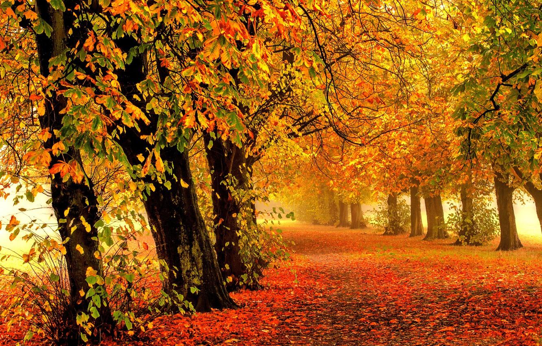 Обои forest, autumn, leaves, tree. Природа foto 6