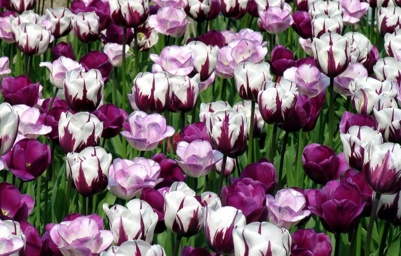 Красивые цветы на рабочий стол   850x1332