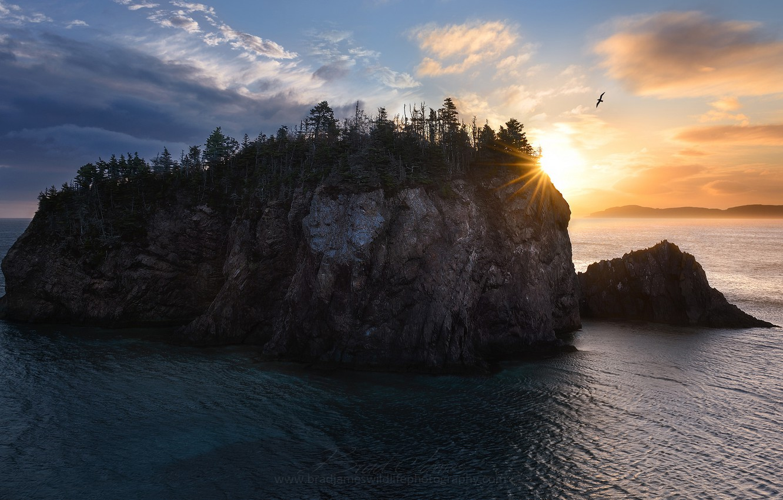 Фото обои море, скалы, птица, утро