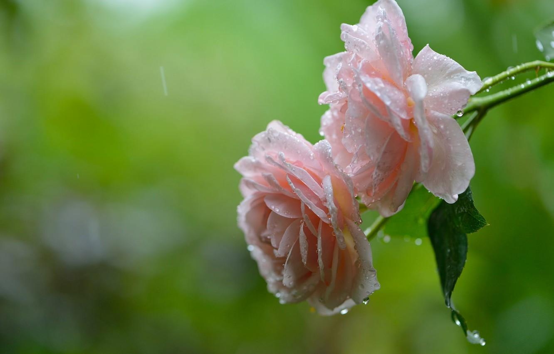 фото красивых цветов и дождь пожалуй