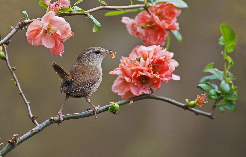 шагом снимаете птица с цветком картинки арендовала бунгало, террасе