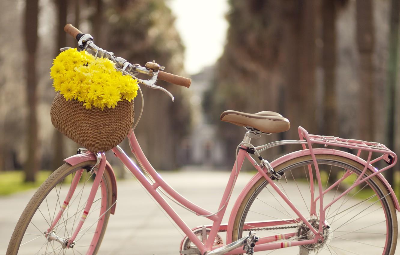 картинки яркие велосипеды частности, именно