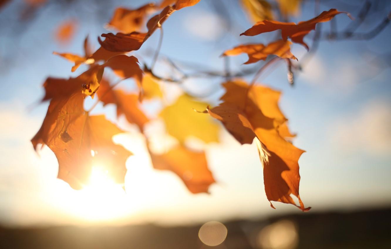 Фото обои осень, небо, листья, солнце, свет, ветки, блики, дерево, ветер, клен