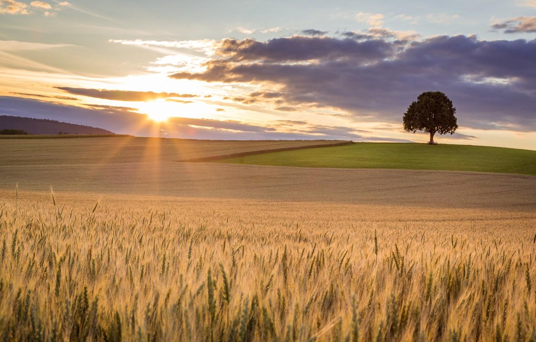 Фото обои поле, свет, дерево