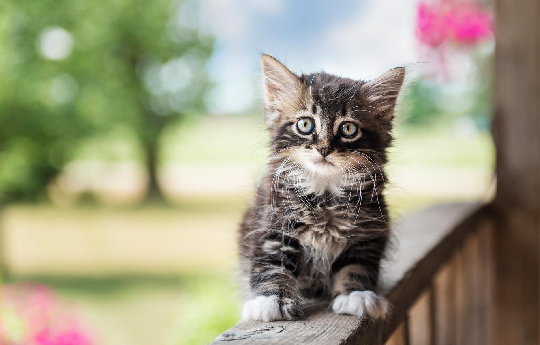 Фото обои взгляд, малыш, котёнок, боке