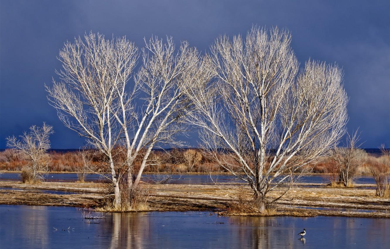 Фото обои небо, вода, деревья, весна, половодье