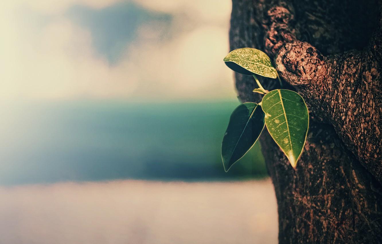 Фото обои листья, макро, фон, дерево, текстура, ствол, кора