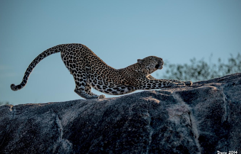 картинки пантера гепард времени перелистывать