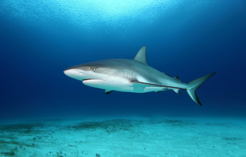 мощности фотографии про акулу белой кухни