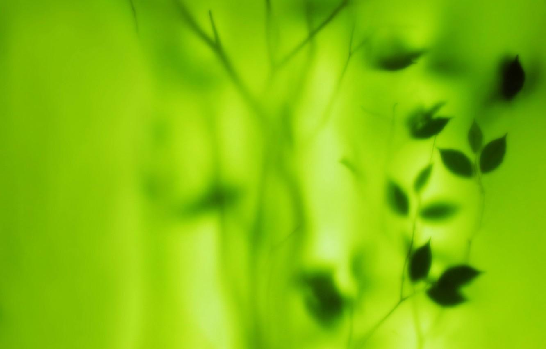 Фото обои зелень, листья, размытие