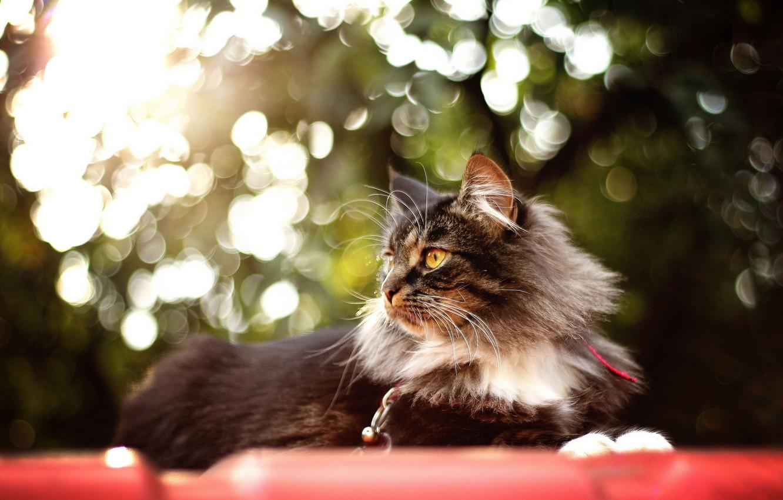 Фото обои кошка, лето, фон