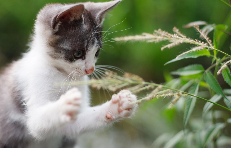 Фото обои лето, лапки, мордочка, котёнок