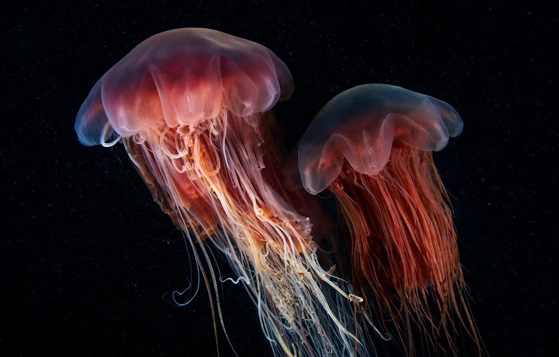 Создание сайта медуза программа для создания сайта майкрософт