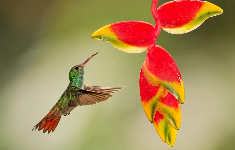 картинки экзотических птиц на рабочий стол родился оборотня
